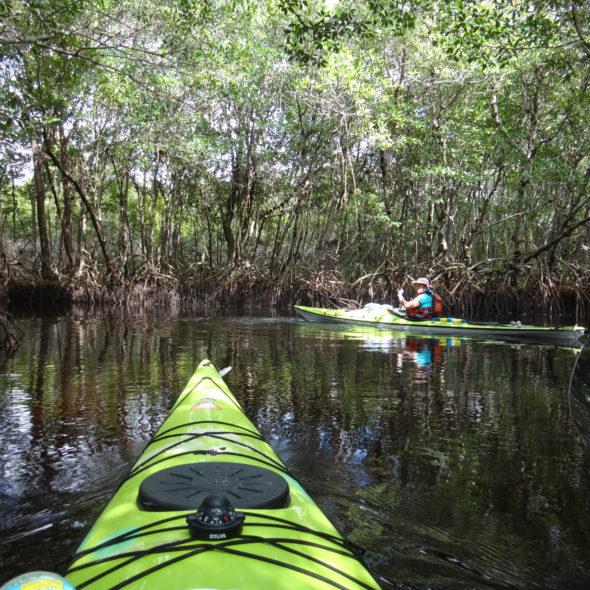 FLORIDA EVERGLADES 2017